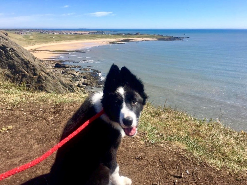 Dog on Fife Coastal Path