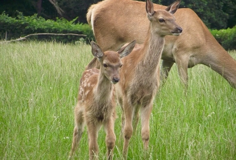Scottish deer centre in Cupar, Fife