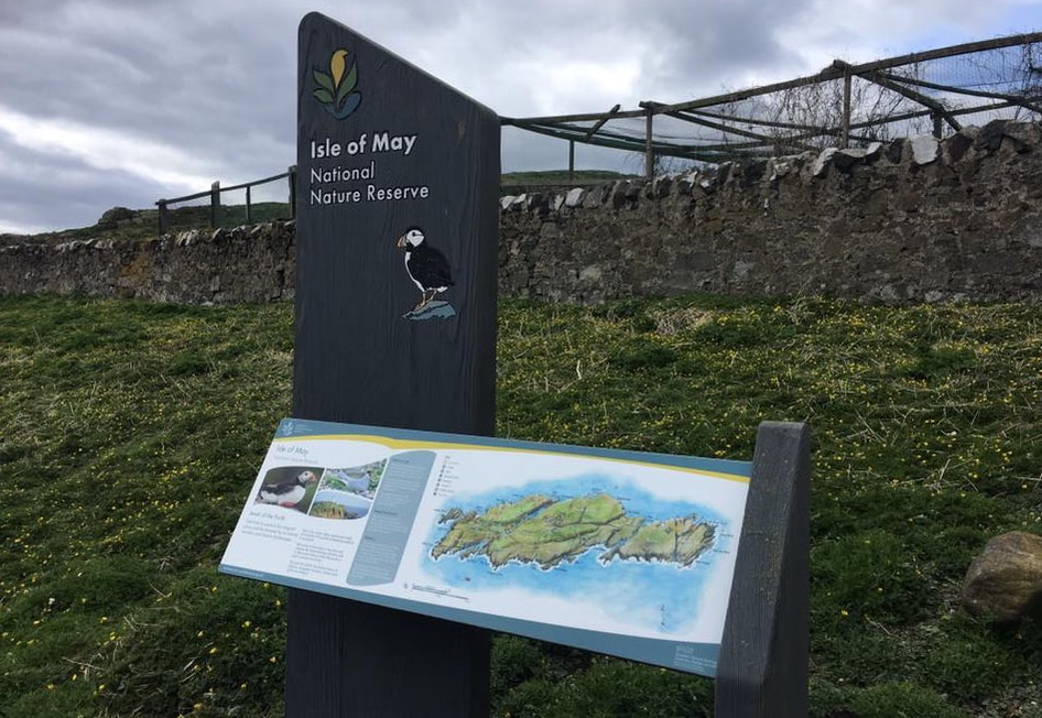 The Isle of May National Nature Reserve