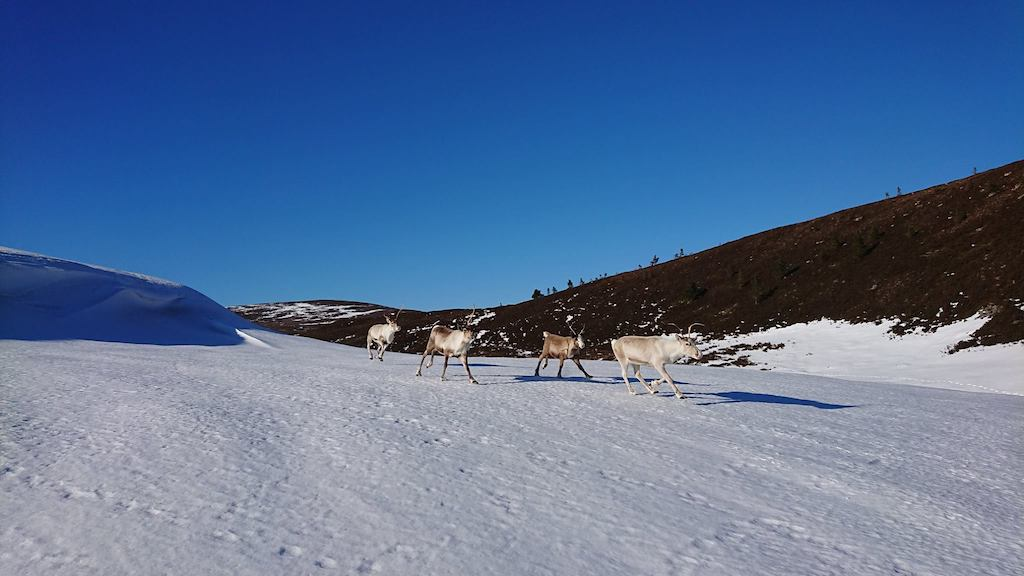 Cairngorms Reindeer Centre, Scottish highlands