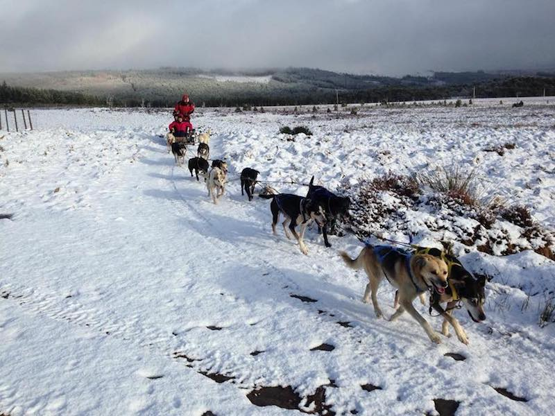 Sleddog centre in the Cairngorms