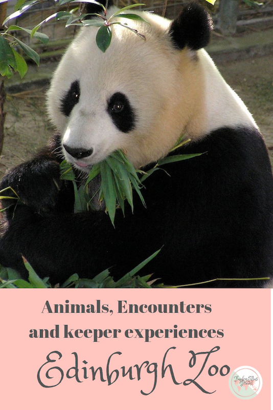 Animals, encounters and keeper experiences at Edinburgh Zoo