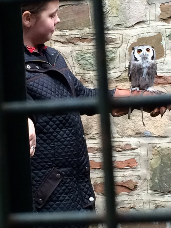 An owl at Edinburgh Zoo