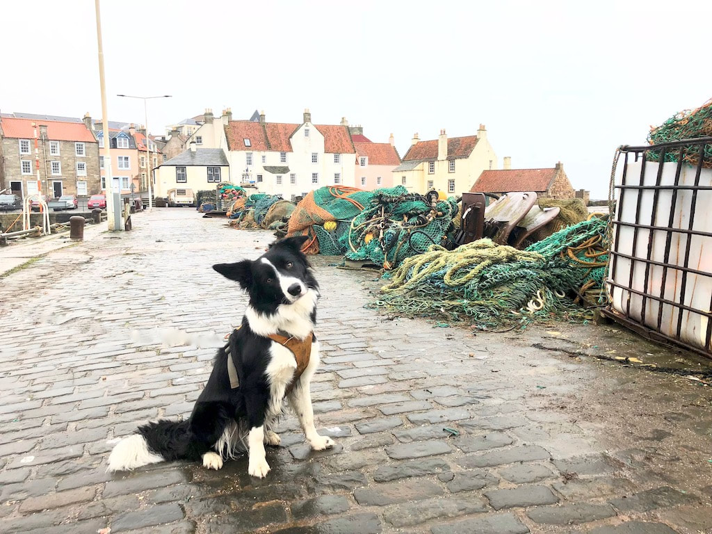 Things to do in Pittenweem, Fife