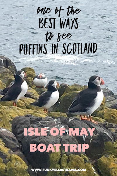 One of the best ways to see puffins in Scotland is to take a trip on the May Princess to the Isle of May off the coast of Fife.