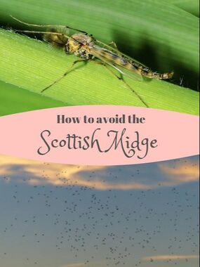 How to avoid the dread Scottish Midge, otherwise known as the Highland Midge. What they love and what they hate, how to keep them away and how to treat the bites.