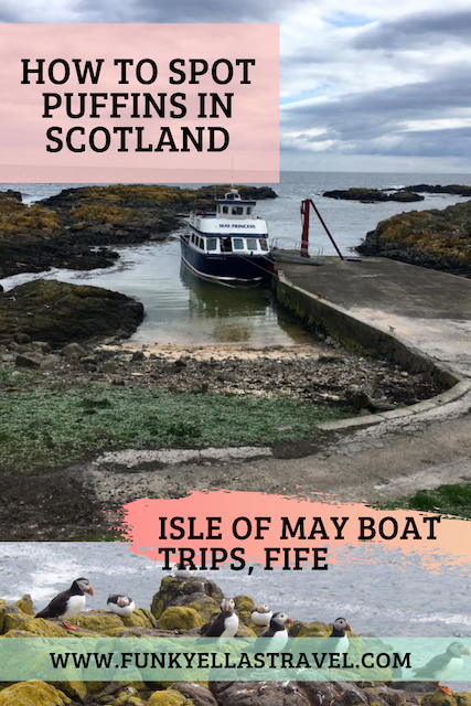 Do you want to spot puffins on your trip to Scotland? The Isle of May has 120,000 puffins who breed on the island from April to August so if you take an Isle of May boat trip you can watch them fish, swim and hunt for food
