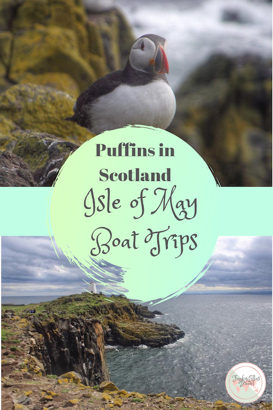 Want to see Puffins in Scotland? The Isle of May boat trips are perfect. The boats leave from the cute little fishing village of Anstruther in the Kingdom of Fife, just half an hour from Edinburgh