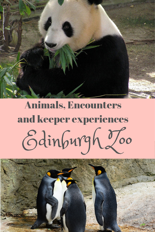 Edinburgh Zoo Keeper experience